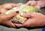 CDL Social se engaja em mais uma campanha de ajuda a famílias carentes